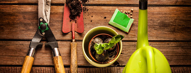No Green Thumb? Yes, Even You Can Grow a Great Garden!