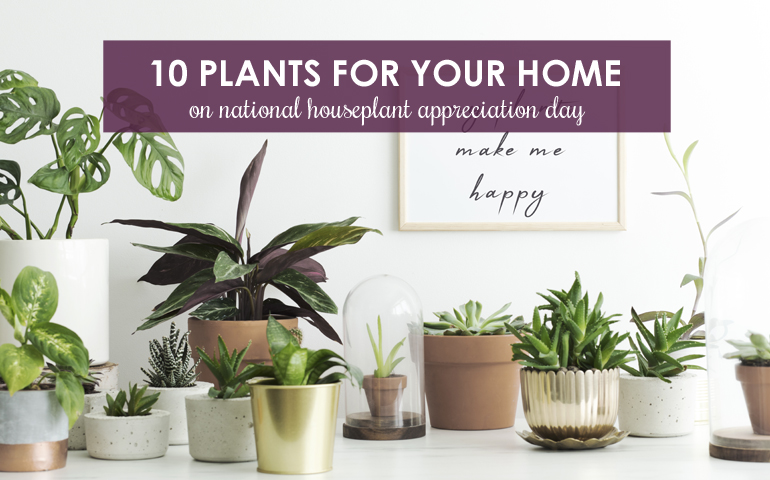 10 Plants for Your Home This National Houseplant Appreciation Day