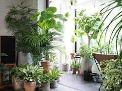 Greens for The Winter Blues: Best House Plants This Winter