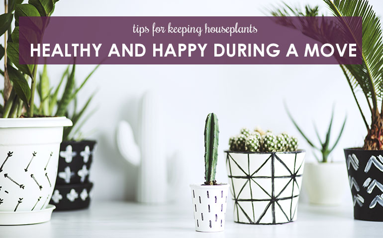 Tips For Keeping Houseplants Healthy and Happy During a Move