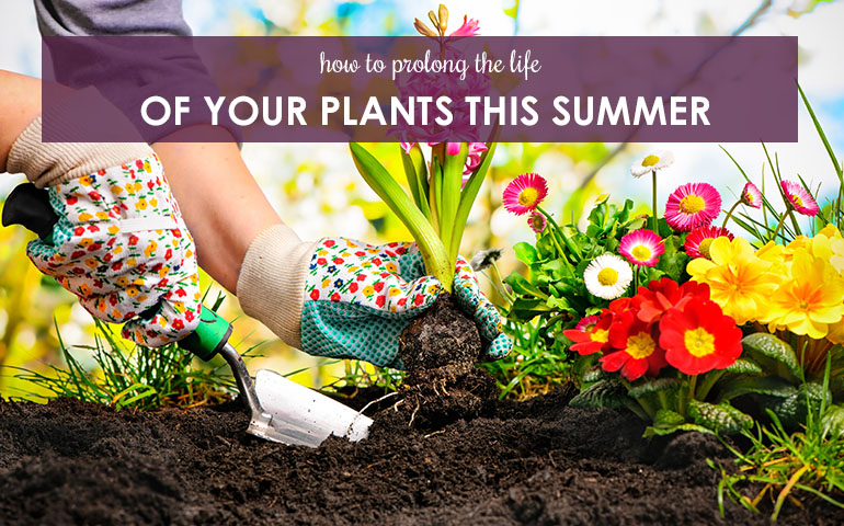 How to Prolong The Life of Your Plants This Summer