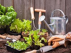 Best Summer Vegetables to Plant in Your Pennsylvania Garden