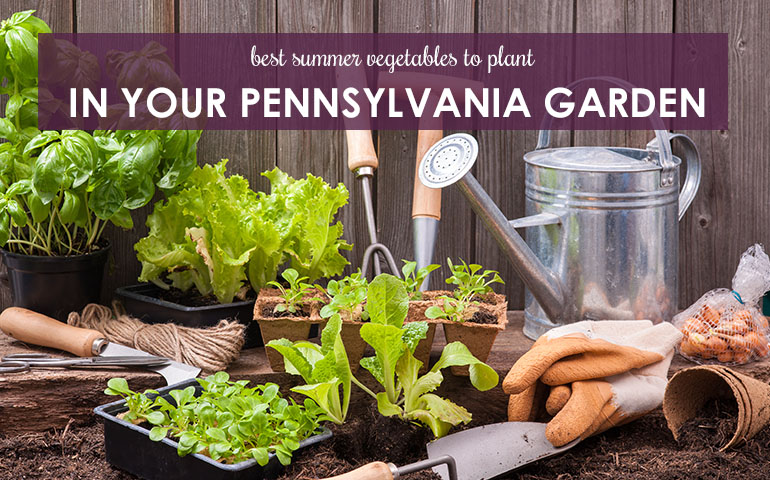 Best Summer Vegetables to Plant in Your Pennsylvania Garden