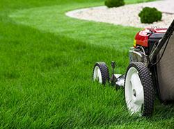 How to Care For Your Lawn During the Summer