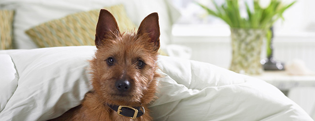 Calling All Pet Owners: Where do Fido and Fluffy Rank in Your Home Search?