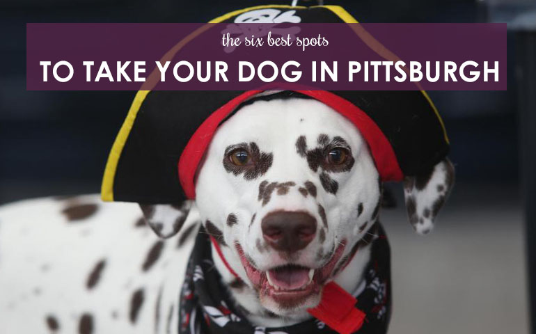 6 Best Spots to Take Your Dog in Pittsburgh