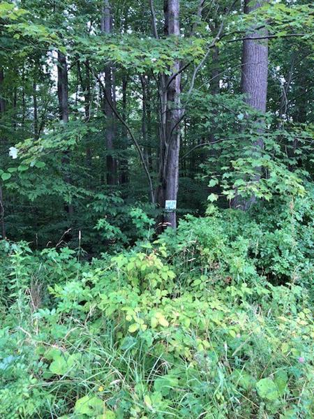28 Trillium Trail