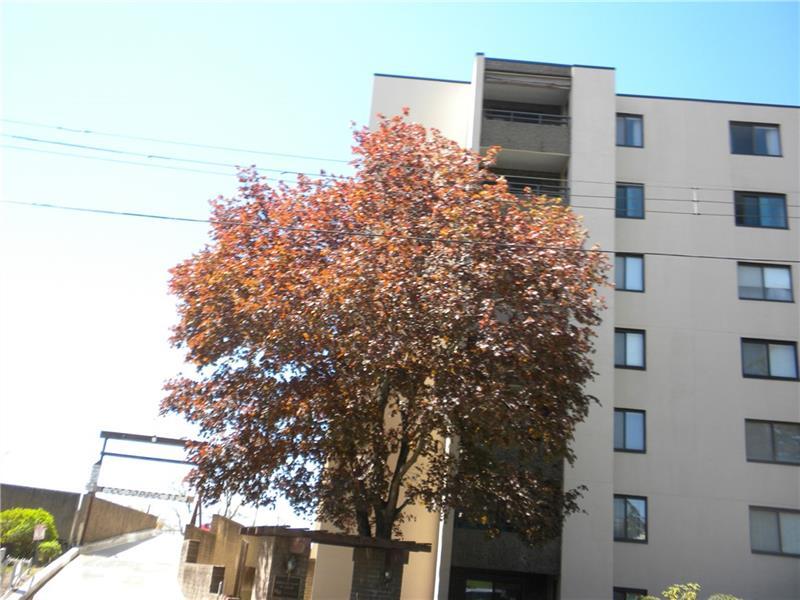 227 S Home Ave, 705, Avalon